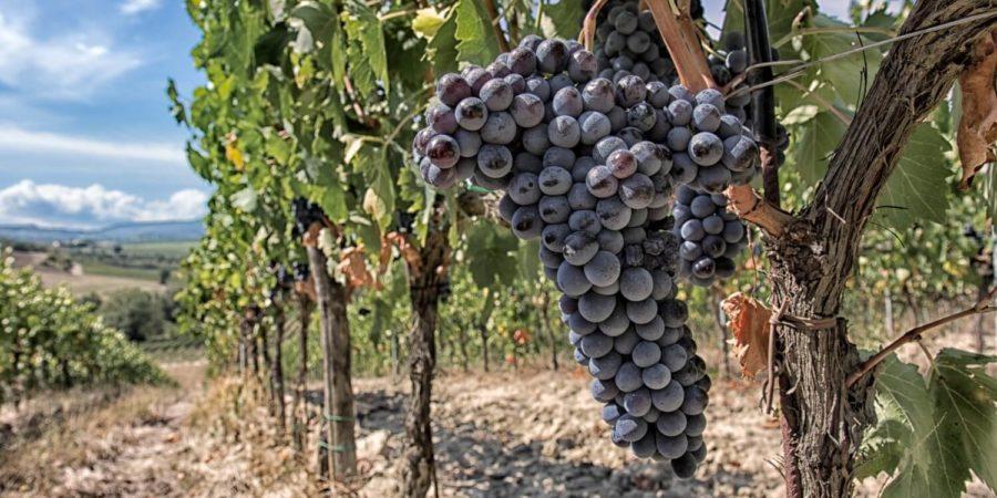 Il Vino e la Poesia